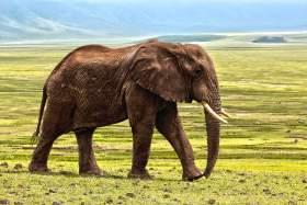 «Καμπανάκι»: Τα πιο μεγάλα ζώα θα έχουν εξαφανιστεί σε 100 χρόνια
