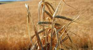 Για μια «έξυπνη» γεωργία στην υπηρεσία της υγιεινής διατροφής και της ευζωίας μας