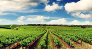CropDiagnosis: Πρωτοπόρο ελληνικό application λύνει τα χέρια σε γεωργούς και γεωπόνους