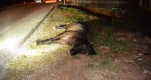 Τροχαίο στην Κόρινθο με θύμα ένα άλογο [ΦΩΤΟ]