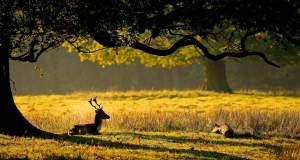 To 10% της άγριας φύσης έχει χαθεί - Ο χάρτης της καταστροφής