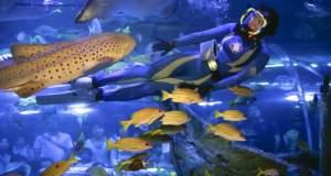 To μεγάλο ψάρι τρώει το μικρό, αλλά το μεγάλο... κινδυνεύει
