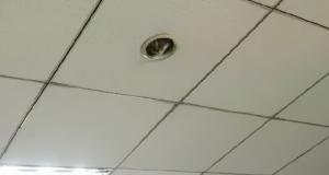 Η γάτα - «κάμερα» που παρακολουθεί τους εργαζόμενους
