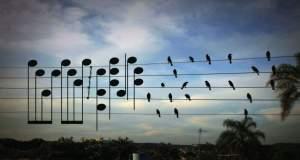 Πουλιά συνθέτουν μουσική μέσω μιας φωτογραφίας! [ΒΙΝΤΕΟ]