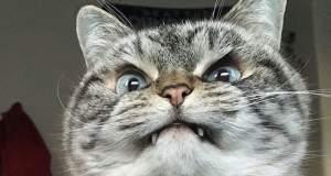 Be Aware! Αυτές οι γάτες είναι πολύ θυμωμένες