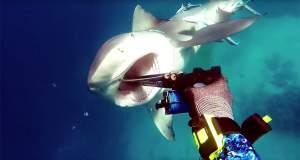 Δύτης τα έβαλε με καρχαρία και κέρδισε [Βίντεο]