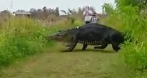 Αυτός ο αλιγάτορας έχει μέγεθος... δεινόσαυρου! [ΒΙΝΤΕΟ]