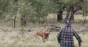 Έριξε μπουνιά στο καγκουρό για να σώσει τον σκύλο του! [ΒΙΝΤΕΟ]