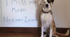 Ξαναβρήκε το σκύλο της που είχε χάσει λόγω του διατάγματος Τραμπ! [ΒΙΝΤΕΟ]