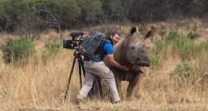 Ρινόκερος ζητά... χάδια από τον καμεραμάν! [ΒΙΝΤΕΟ]