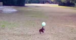 Σκύλος παίζει μπάλα καλύτερα από τους περισσότερους από εμάς [ΒΙΝΤΕΟ]