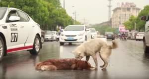 Σκύλος θρηνεί τον φίλο του [ΒΙΝΤΕΟ]