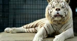 Frankencats: Δημιούργουν υβρίδια άγριων ζώων για… «διασκέδαση»