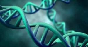 Μια γονιδιακή μετάλλαξη υπόσχεται μακροζωία μόνο για άνδρες
