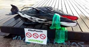 Θεσσαλονίκη: Ένα δελφίνι από… πλαστικά ξέβρασε η θάλασσα