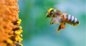 Δηλητηριάζουμε τις μέλισσές μας;
