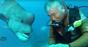 Ο δύτης και το ψάρι είναι οι καλύτεροι φίλοι! [ΒΙΝΤΕΟ]