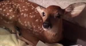 Σκύλος σώζει ελαφάκι από πνιγμό [ΒΙΝΤΕΟ]