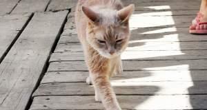 Αλάσκα: Πέθανε ο πιο αγαπητός δήμαρχος-γάτος