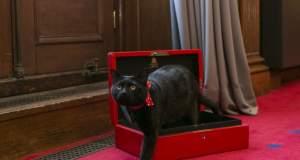 Γλάδστων: Ο γάτος του βρετανικού υπουργείου Οικονομικών