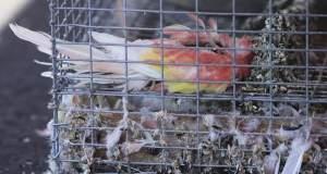 Βρήκαν 2.000 ζώα σε άθλιες συνθήκες ή νεκρά μέσα σε αποθήκη στο Λος Άντζελες [ΦΩΤΟ+ΒΙΝΤΕΟ]