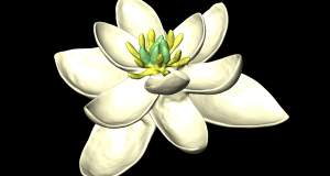 Αυτό ήταν το πρώτο λουλουδάκι της Γης, μαμά και μπαμπάς όλων των λουλουδιών
