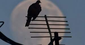 Ο ουρανός έβαλε τα καλά του… ένα τεράστιο φεγγάρι [ΦΩΤΟ]