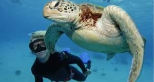 Δύτες απελευθέρωσαν θαλάσσια χελώνα [ΒΙΝΤΕΟ]
