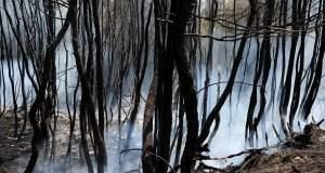 Οι πυρκαγιές έκαψαν και την πολιτική και την ενημέρωση