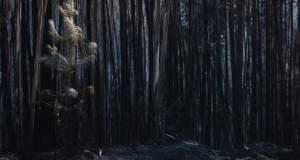 Πορτογαλία: 1,4 εκατ. στρέμματα δάσους έγιναν στάχτη από τις αρχές του έτους