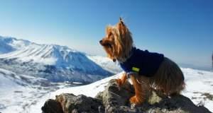 13 περιπετειώδη σκυλιά εξερευνούν τον κόσμο [ΦΩΤΟ]