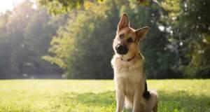 6 απίστευτα πράγματα που διαισθάνονται οι σκύλοι