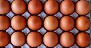 Γενετικά τροποποιημένα κοτόπουλα γεννούν αυγά - φάρμακα