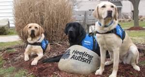 Πως ένας σκύλος βοηθάει παιδί με αυτισμό [ΒΙΝΤΕΟ]