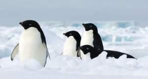 Aνταρκτική: Χιλιάδες πιγκουίνοι πέθαναν από έλλειψη τροφής