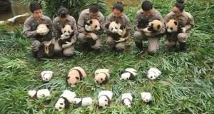 Κίνα: Ρεκόρ με 42 μωρά πάντα στο κέντρο προστασίας