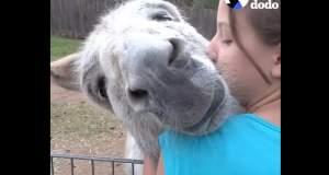 Ποιος είπε ότι τα ζώα δεν έχουν ανάγκη από αγκαλιές; [ΒΙΝΤΕΟ]