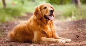 Τι μας λέει ο σκύλος μας;
