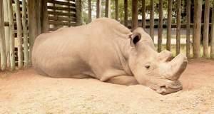 Μια εμβληματική φωτογραφία για την εξαφάνιση των ειδών