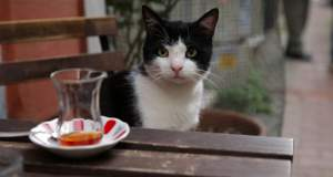 Ανακαλύπτοντας τις «Γάτες της Κωνσταντινούπολης»