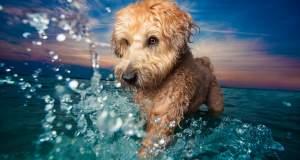 «Dog Photographer of the Year»: Τα πιο όμορφο σκυλιά της χρονιάς