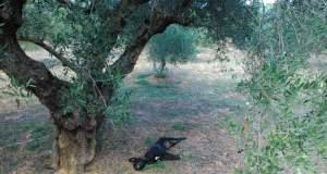 Νέα βαρβαρότητα: Κρέμασαν σκυλί από δέντρο