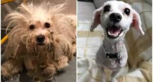 Η μεταμόρφωση σκύλου που βρήκε καινούρια οικογένεια [ΦΩΤΟ]