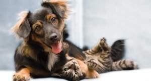 Ποιος είναι τελικά πιο έξυπνος ο σκύλος ή η γάτα;