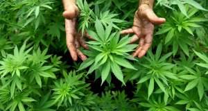 Athens Cannabis Expo 2018: Τα πολλαπλά οφέλη ενός παρεξηγημένου φυτού
