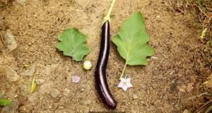 Καλλιέργειες υπερ-φυτών στην υπηρεσία της ανθρωπότητας