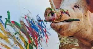 Ένα γουρούνι με το ταλέντο του… Πικάσο [ΦΩΤΟ+ΒΙΝΤΕΟ]