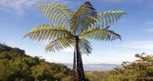 Τα πρώτα φυτά στον πλανήτη εμφανίστηκαν πριν από 500 εκατ. χρόνια