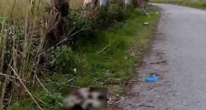 Πυροβόλησαν και σκότωσαν επτά κουτάβια στο Μεσολόγγι