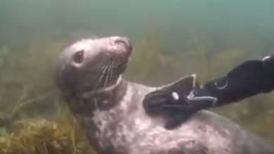 Δύτης και φώκια αγκαλιάζονται κάτω από το νερό! [ΒΙΝΤΕΟ]